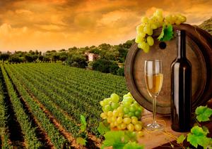 тур выходного дня по музею коньячного завода Шустов и шампанских вин Французский бульвар в Одессе