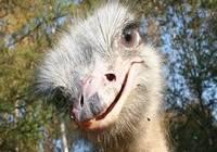 Экскурсионный тур на страусиную ферму из Одессы