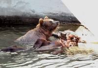 Экскурсионный тур в Николаевский зоопарк из Одессы